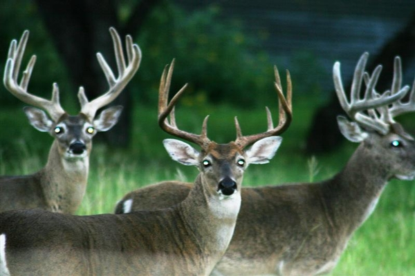Antler Growth for Beginners