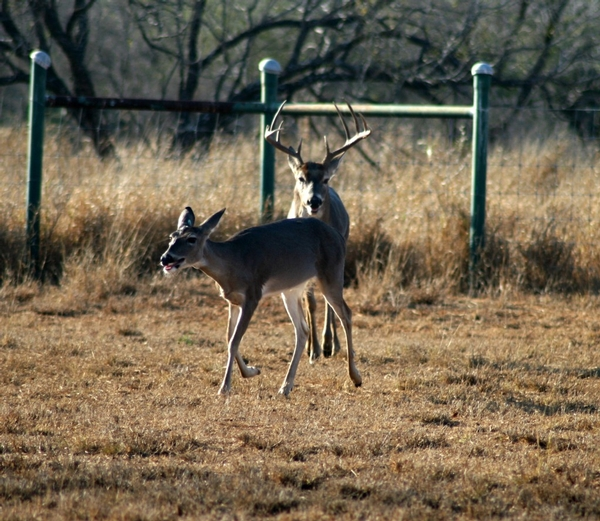 The Magic of the Rut